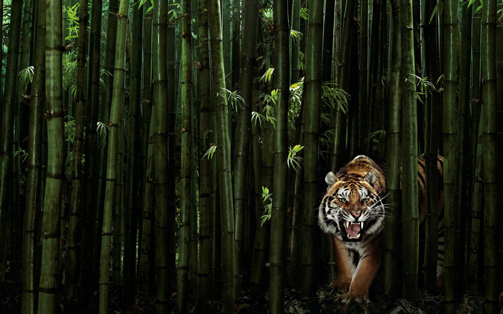 tiger wallpaper green
