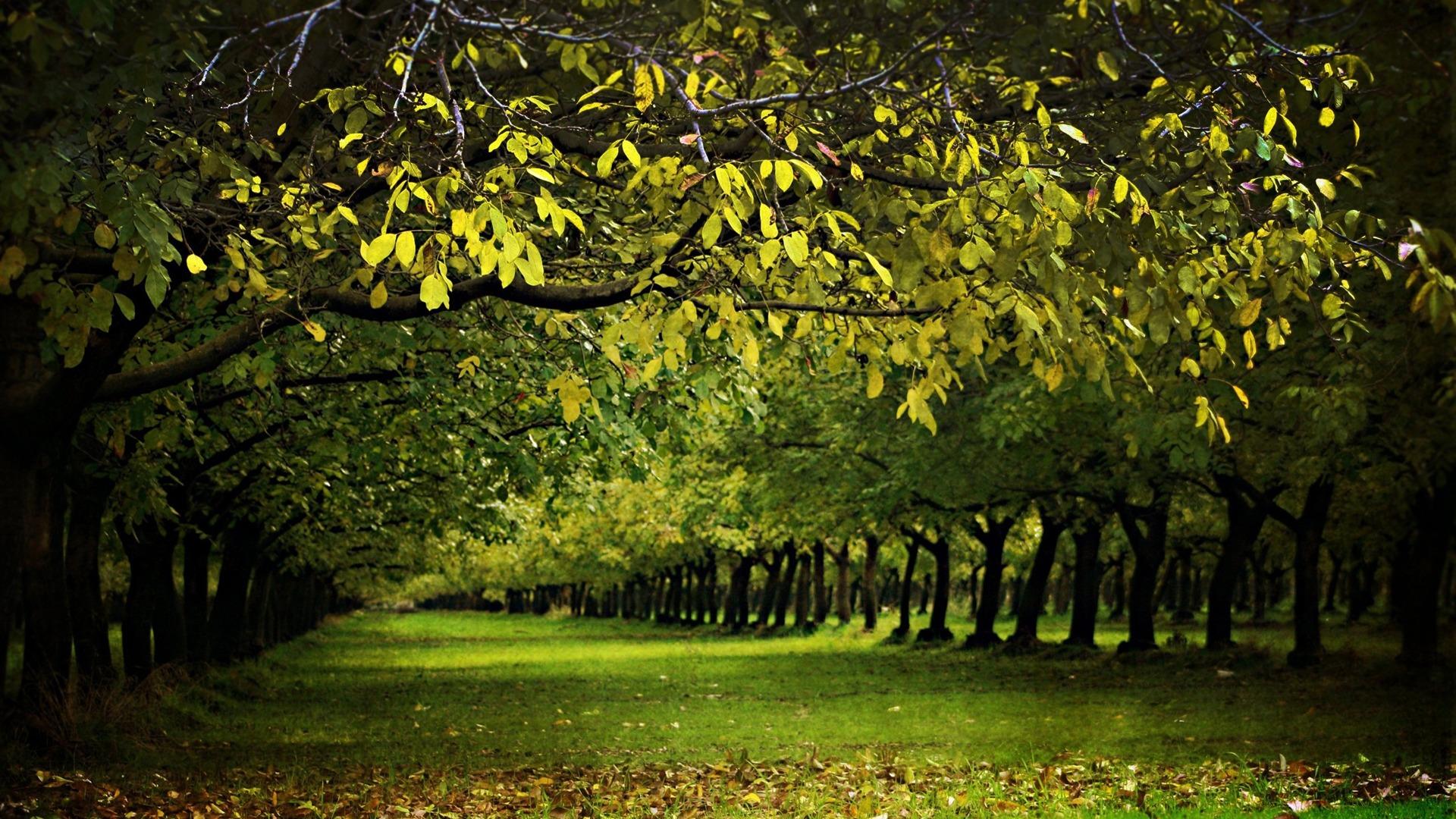 tree wallpaper uk