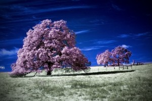 trees wallpaper download