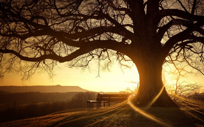 trees wallpapers 3d sunset