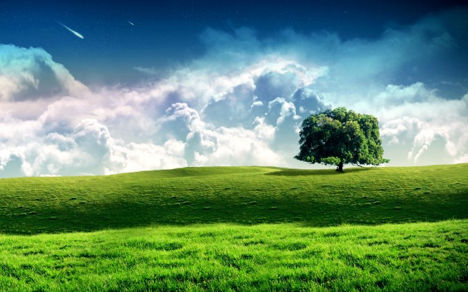 trees wallpapers