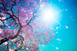 trees wallpapers amazing