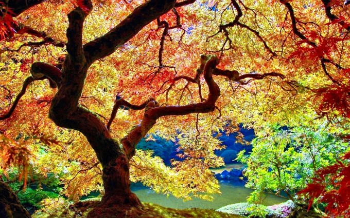 trees wallpapers colorful