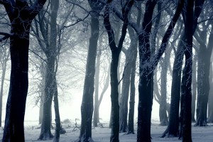 trees wallpapers dark forest
