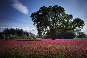 trees wallpapers flowers
