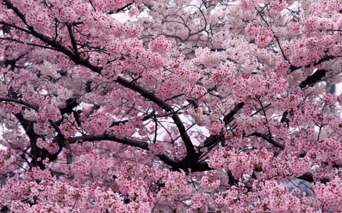 trees wallpapers great