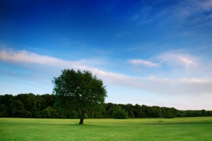 trees wallpapers green