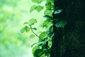 trees wallpapers leaves