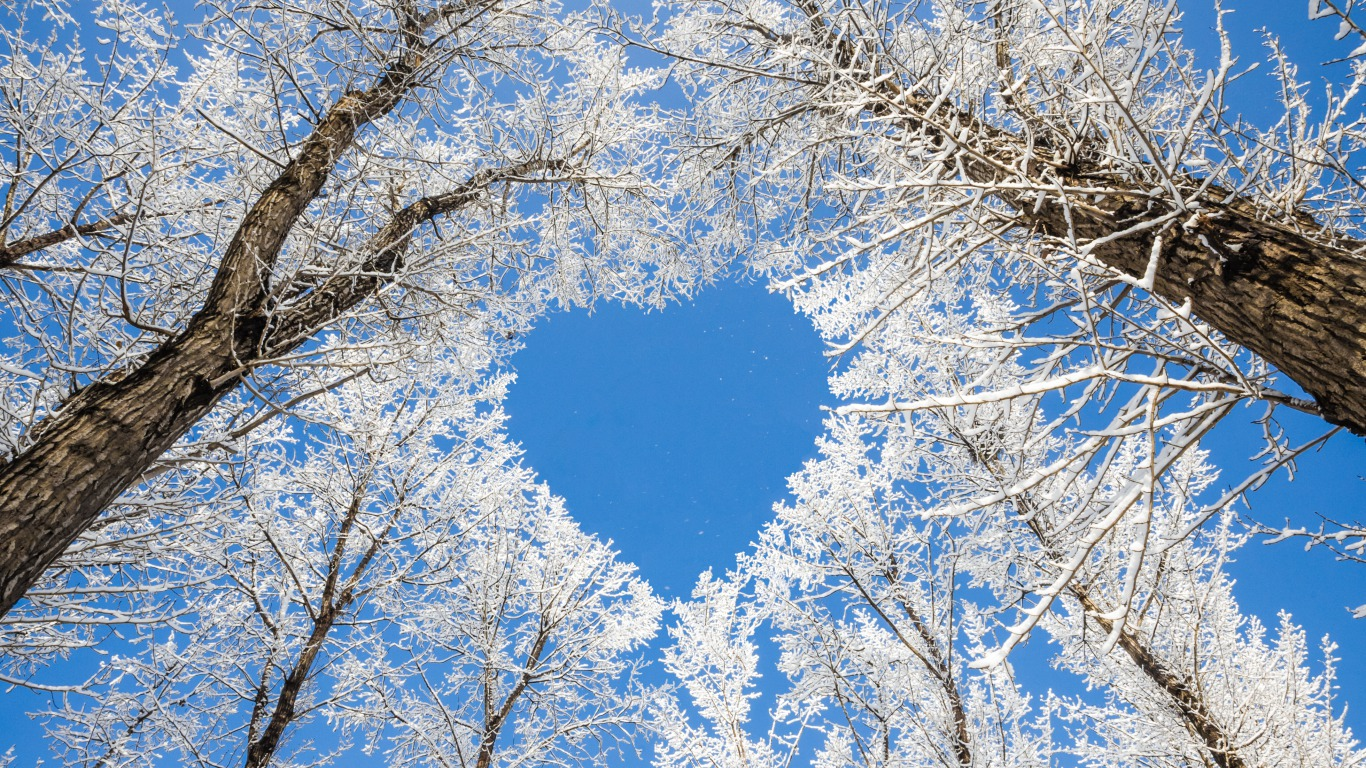 trees wallpapers love heart