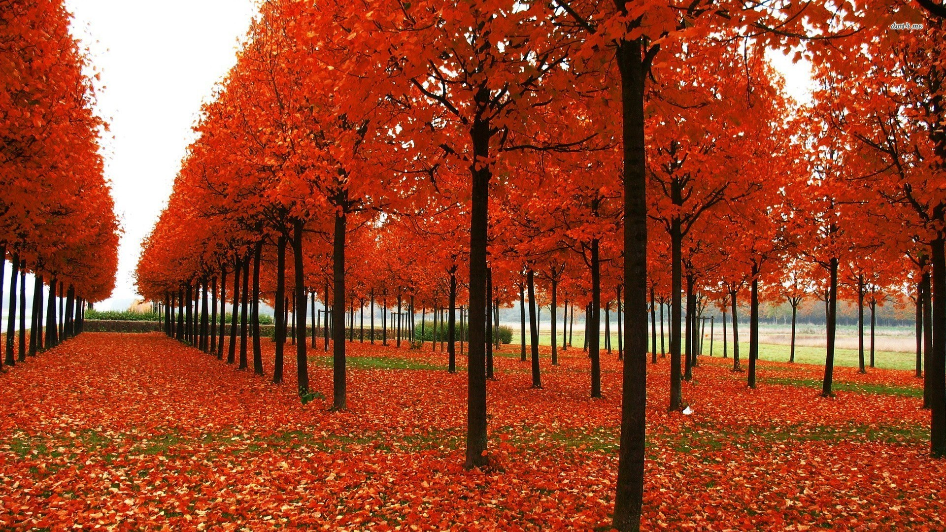 trees wallpapers magnificent