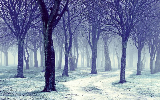 trees wallpapers photography