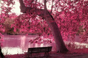 trees wallpapers pink