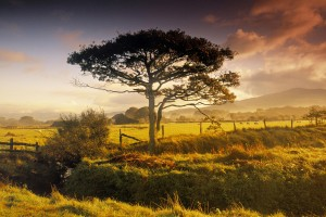 trees wallpapers stunning