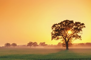trees wallpapers sunrise