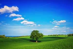 trees wallpapers sweet