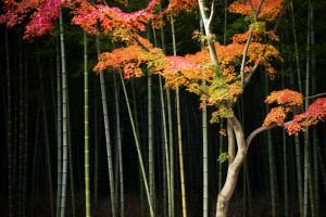 trees wallpapers tablet