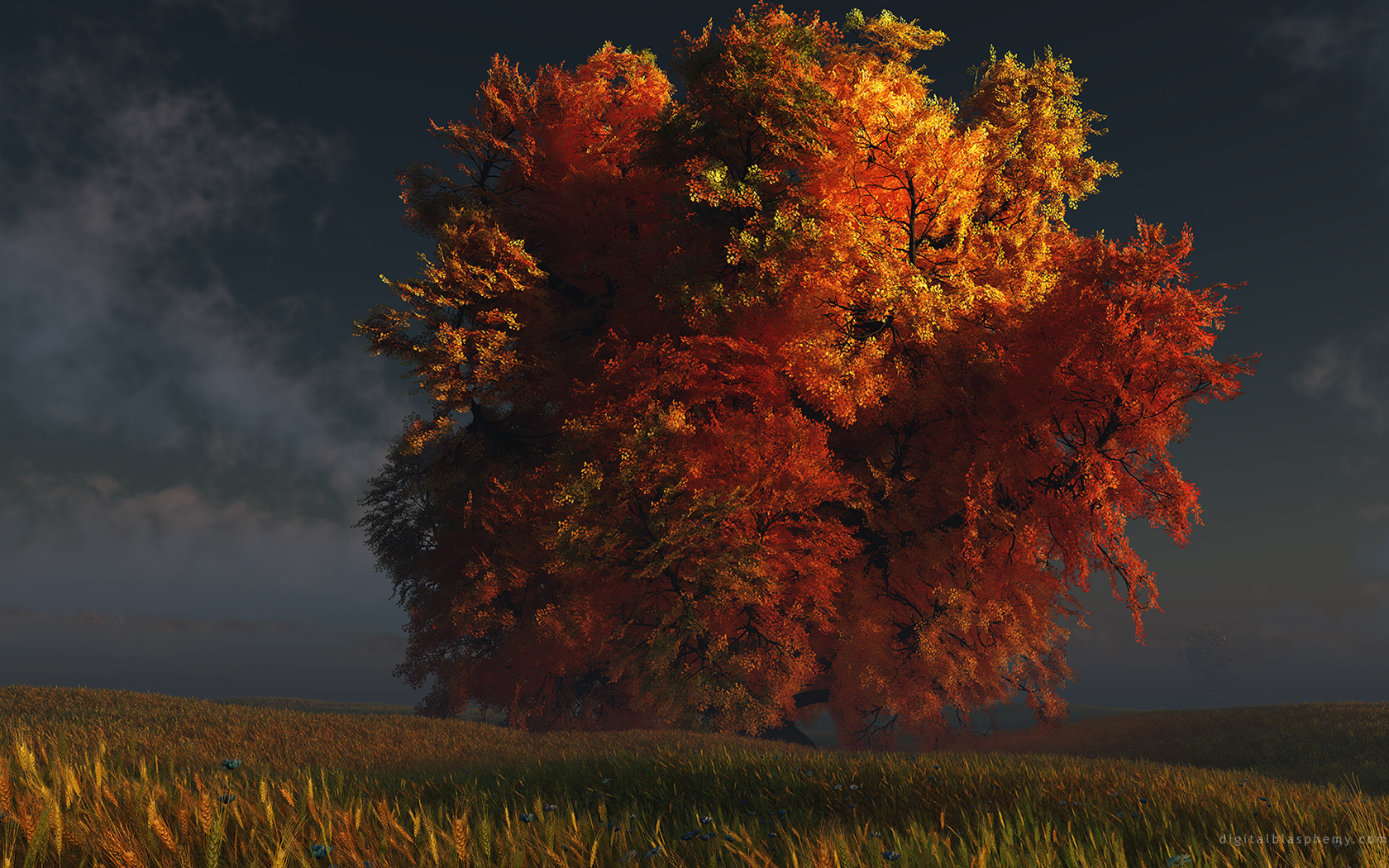 trees wallpapers widescreen