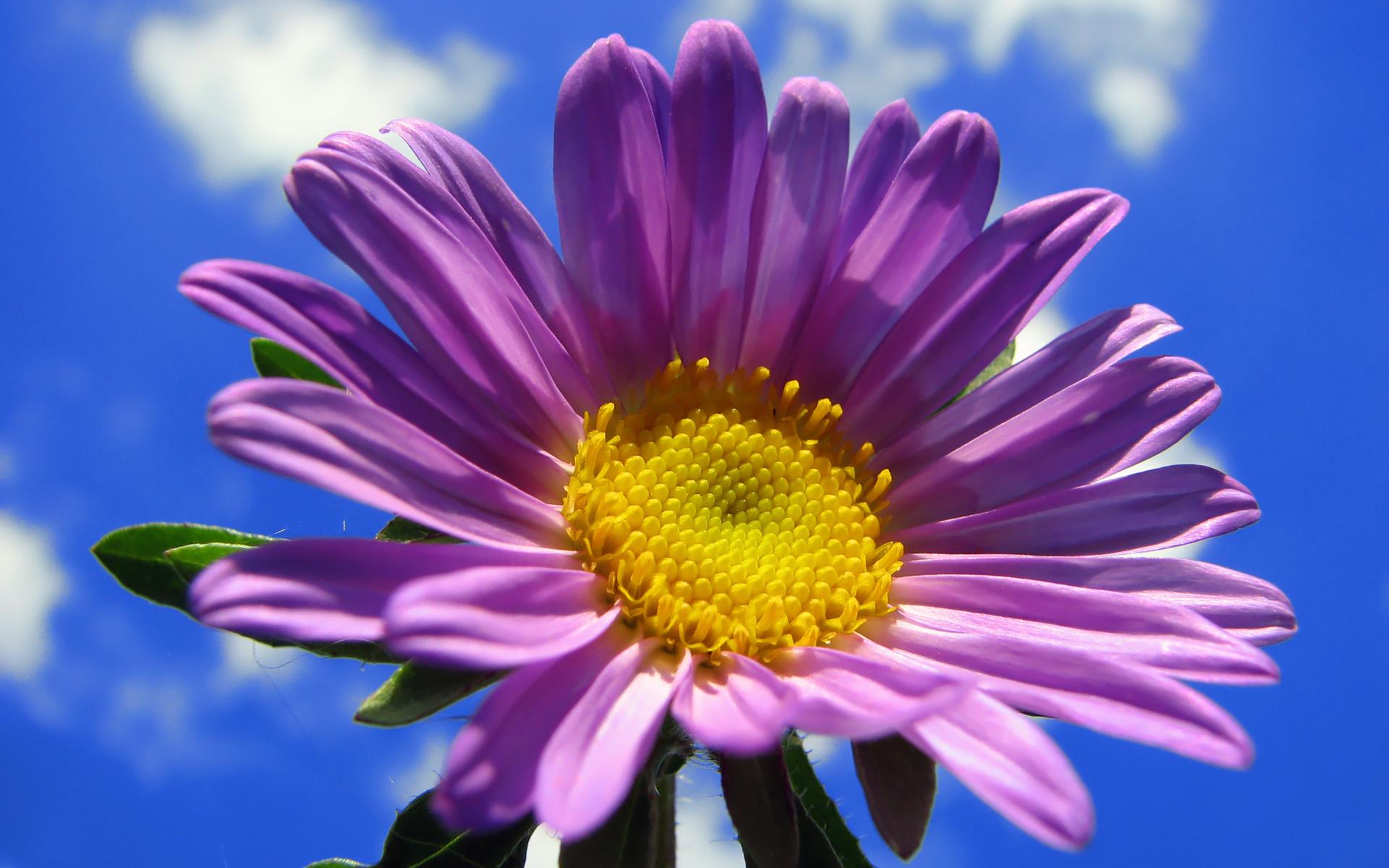Wallpaper Flower Hd Desktop Wallpapers 4k Hd