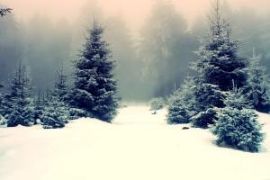 wallpaper winter scenes