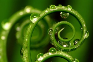 water wallpaper curly