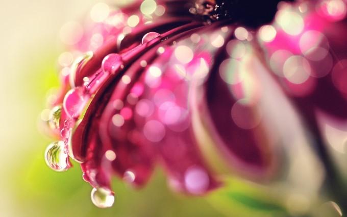 water wallpaper flower