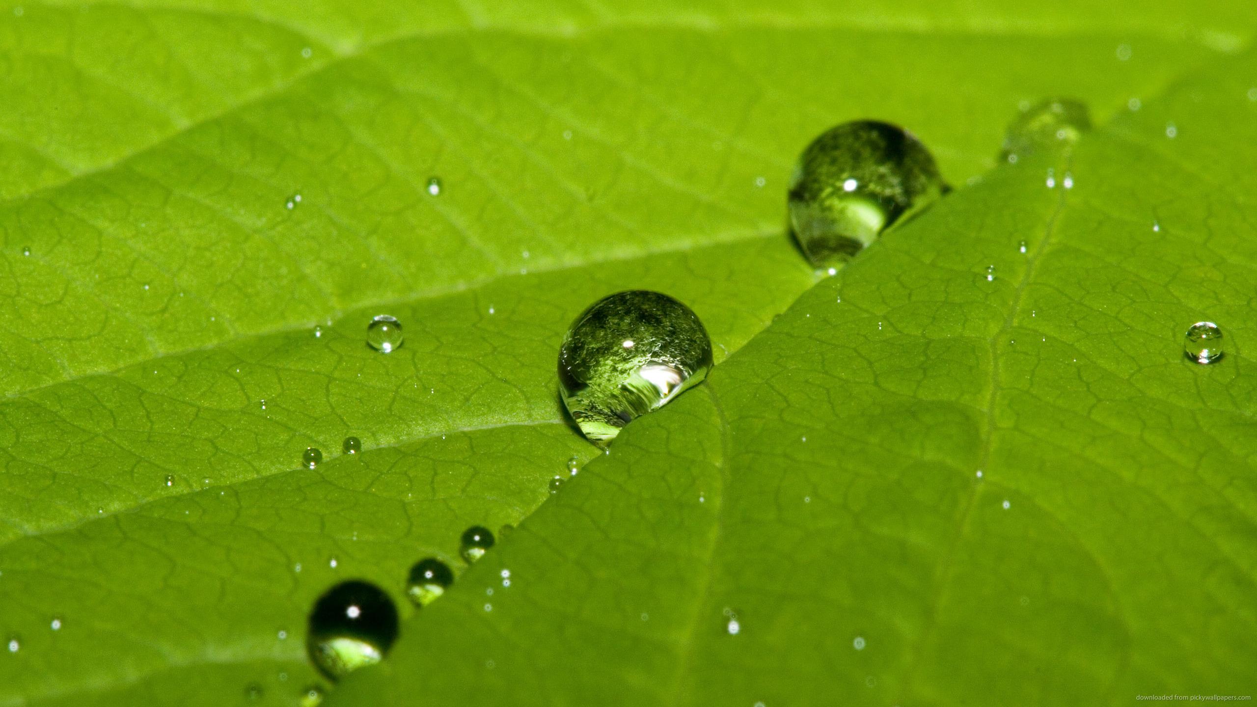 Water Drops 2 Desktop Background