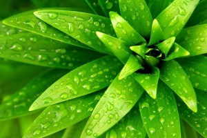 water wallpaper plant