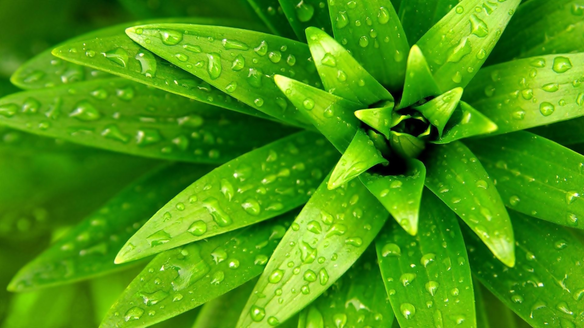 water wallpaper plant