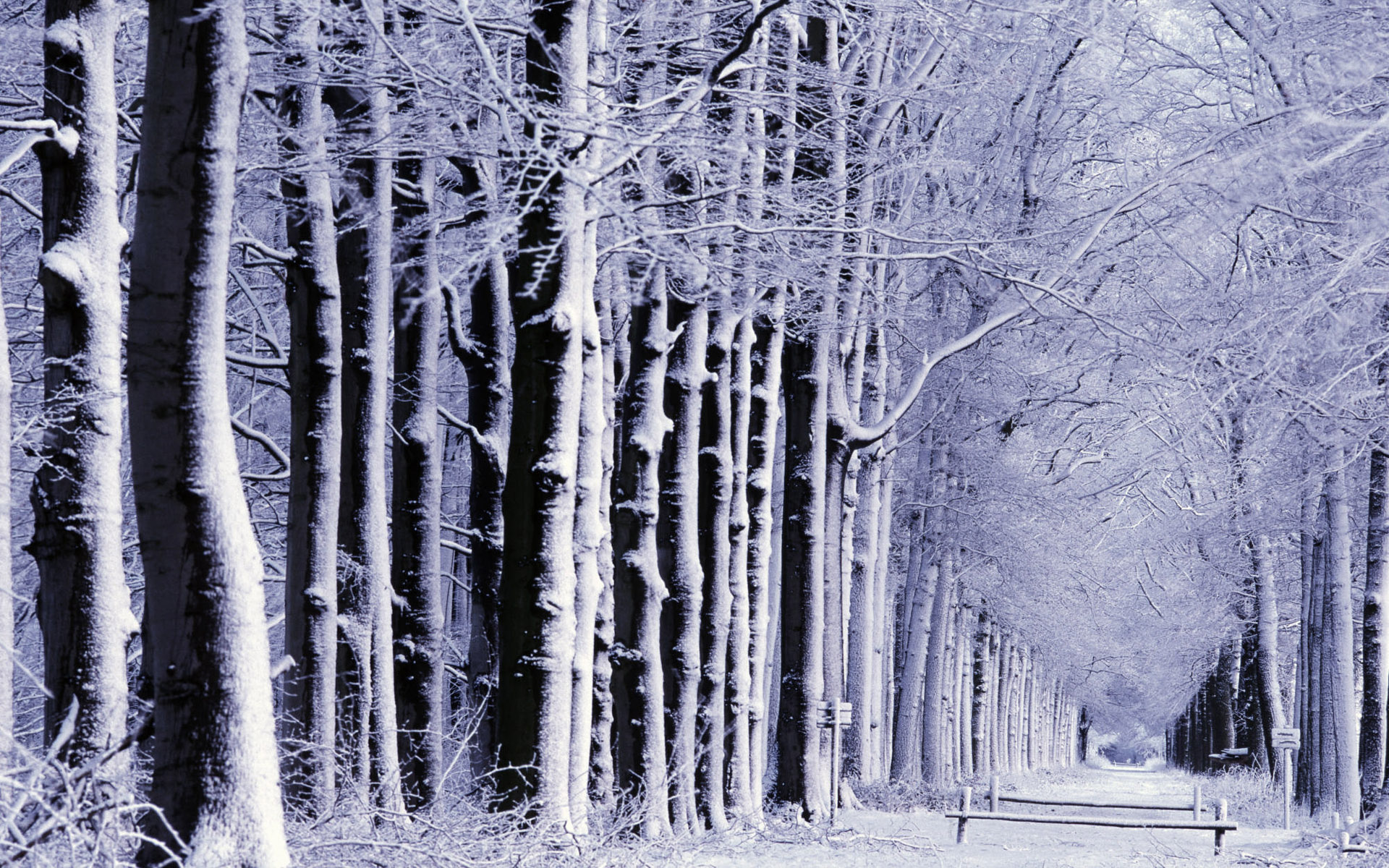 Path through forest of snow-covered trees, Europe