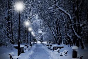winter tree wallpaper