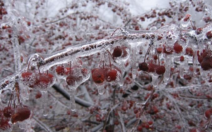 winter wallpapers hd berries