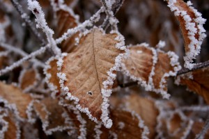 winter wallpapers hd picture