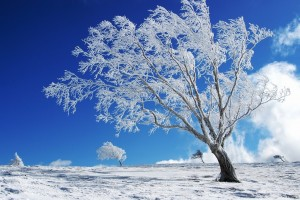 winter wallpapers hd trees