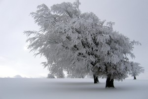 winter wallpapers tree