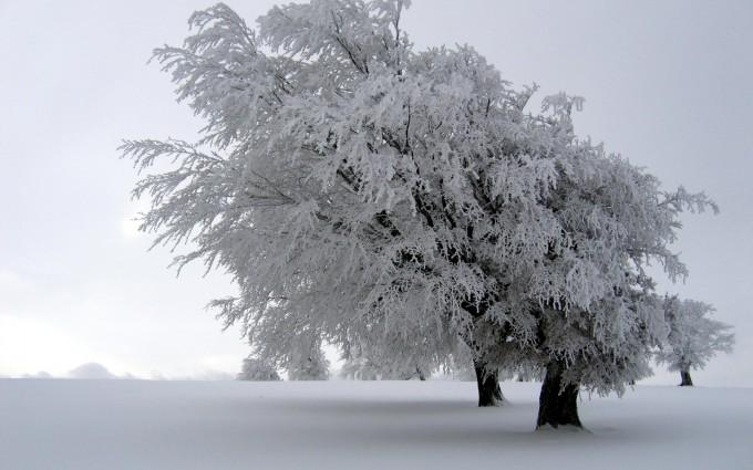 winter wallpapers tree