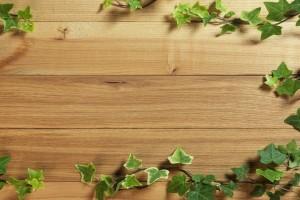 wood wallpaper green