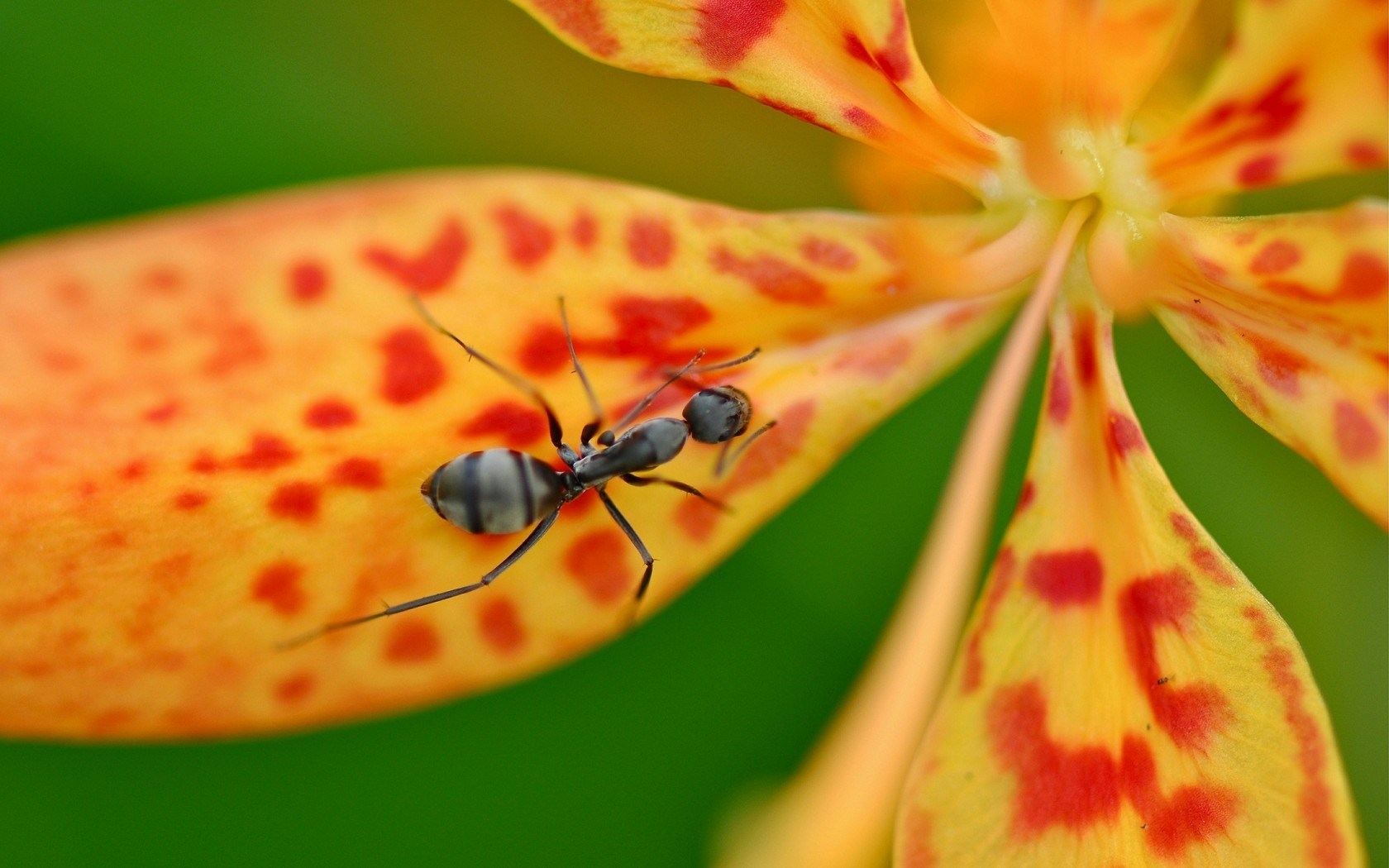 ant nature wallpaper