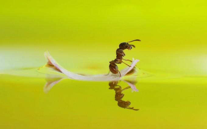 ant wallpaper hd