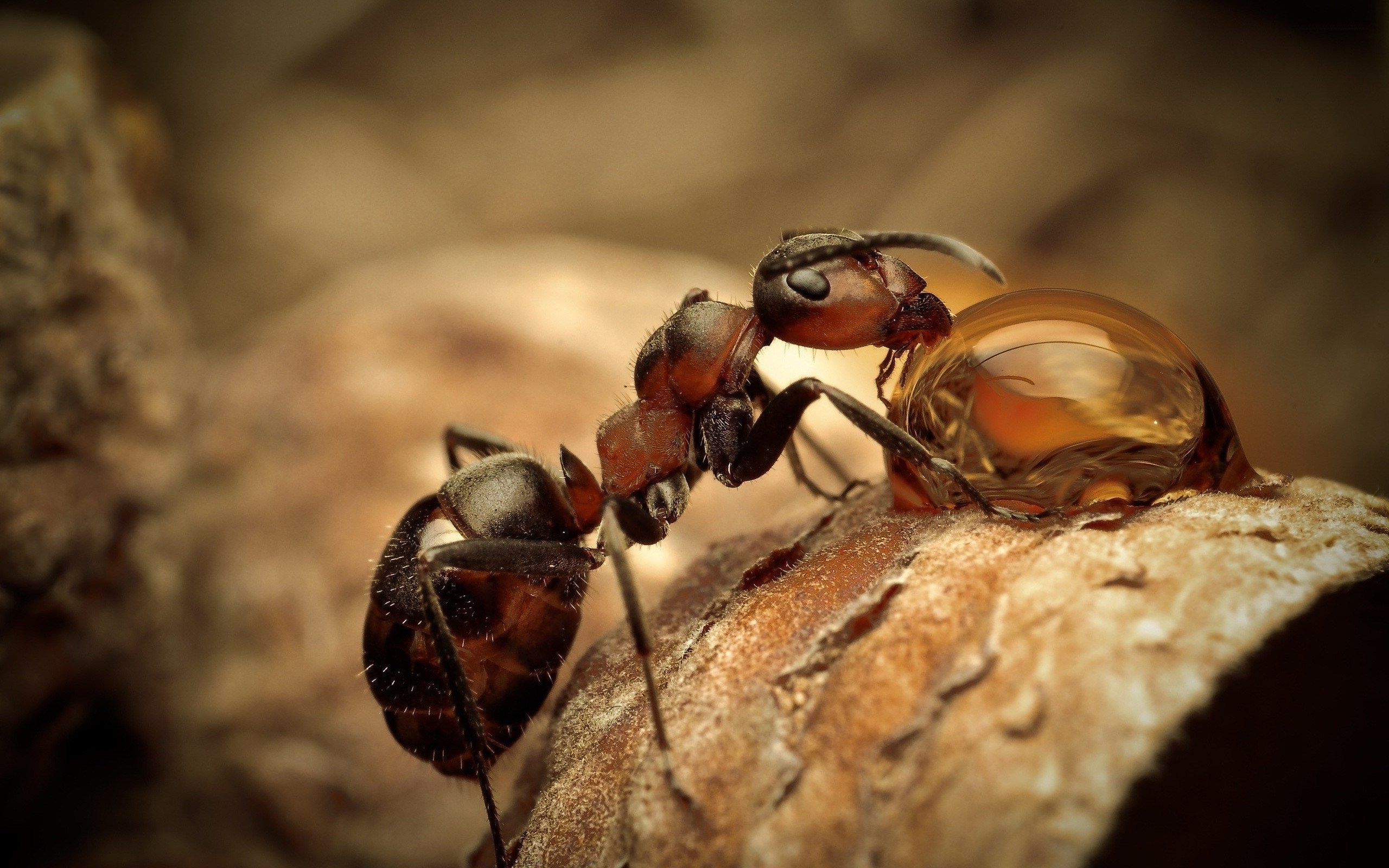 ant wallpaper