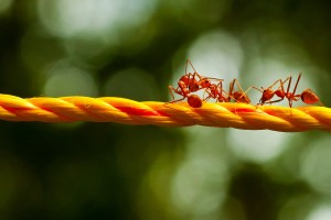ants images