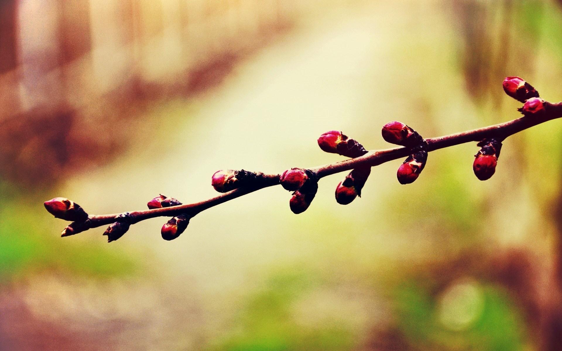 apricot nature