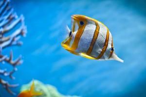 aquarium fish nature
