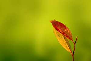 autumn android leaves wallpaper
