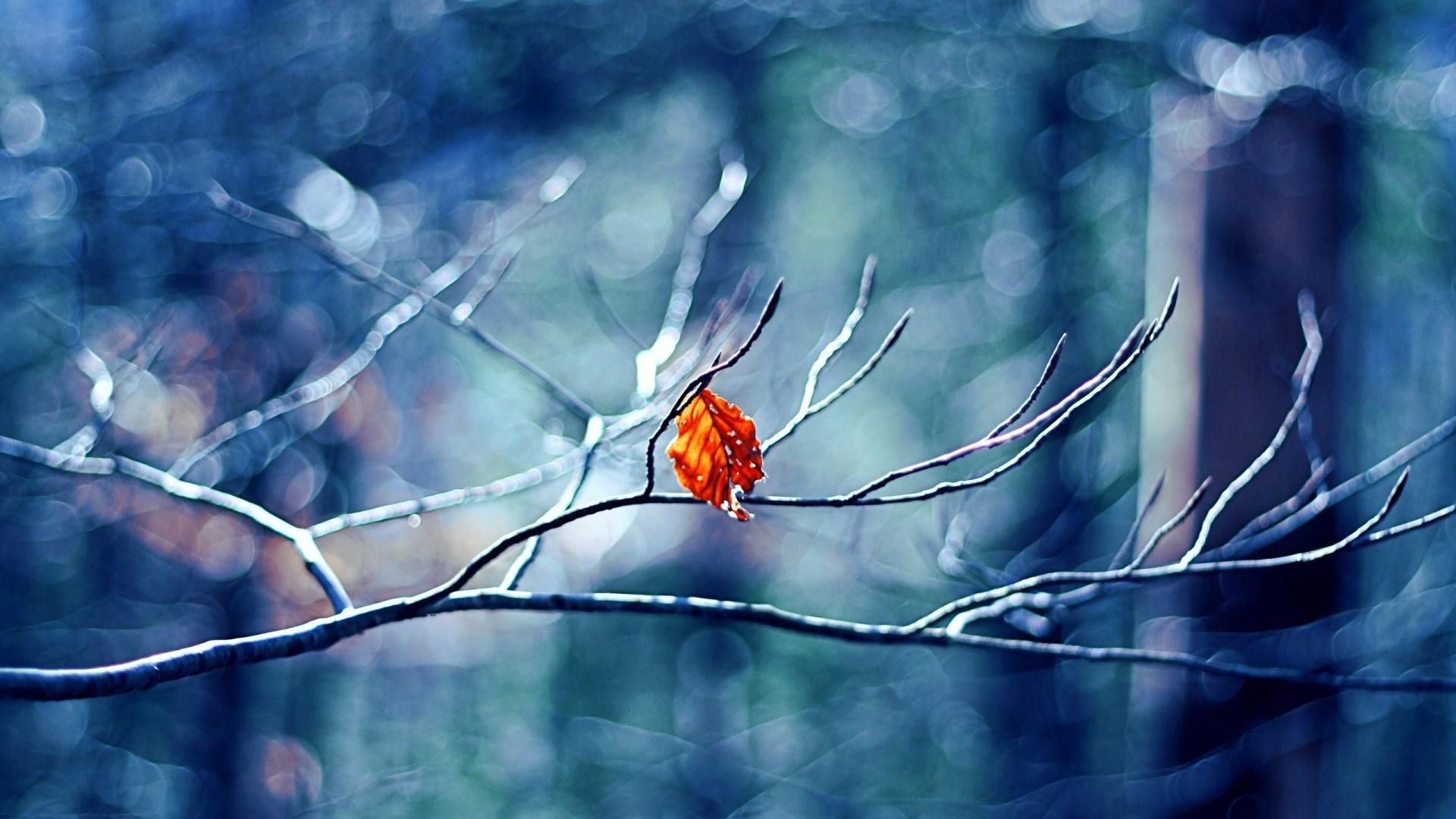 autumn beautiful leaf