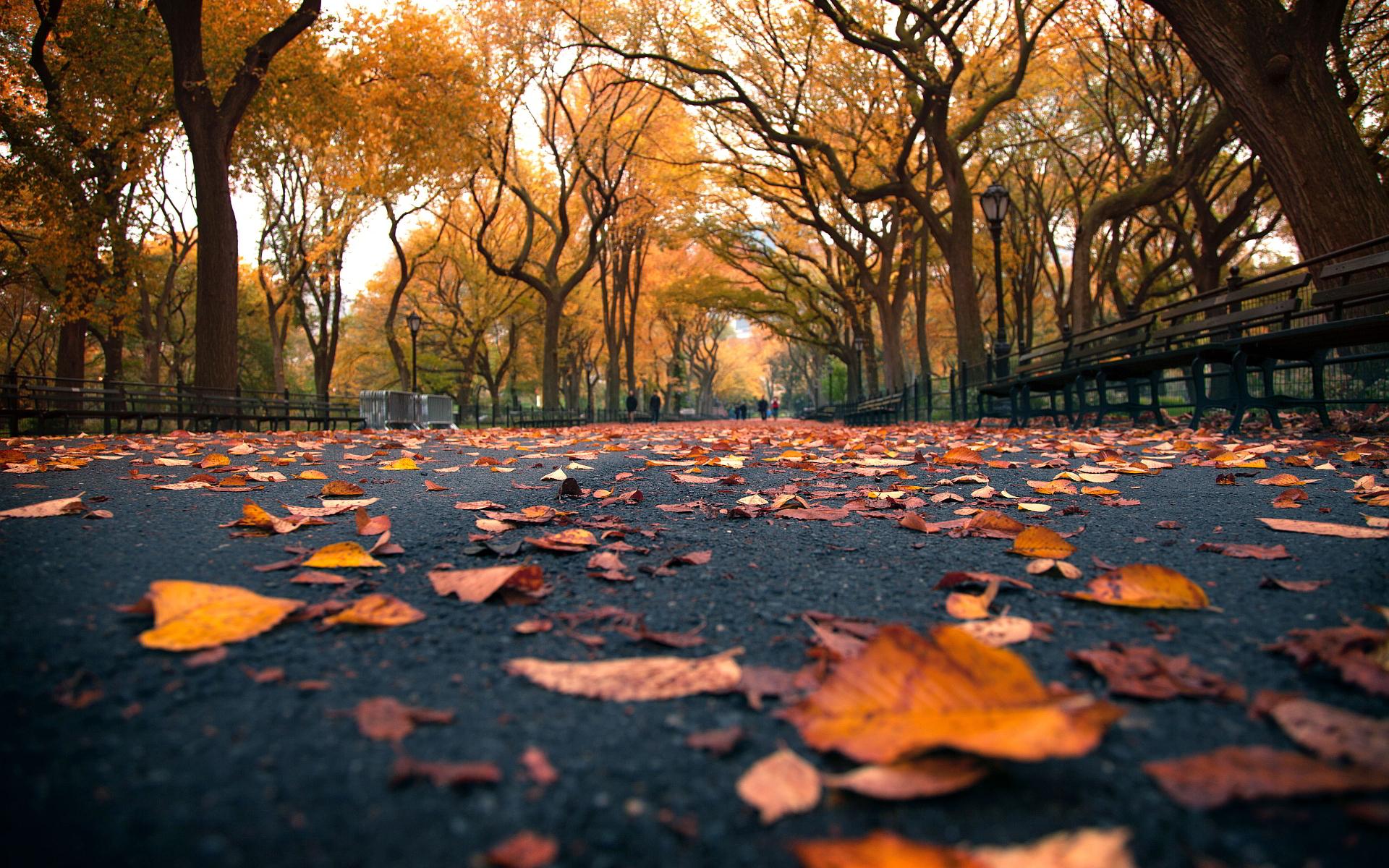 autumn beautiful leaves