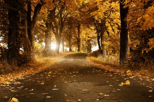 autumn beautiful road