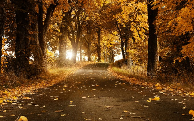 autumn beautiful road