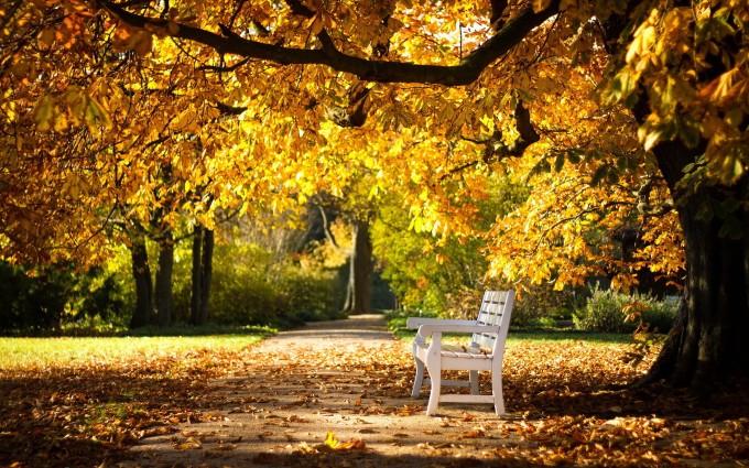autumn bench wallpaper
