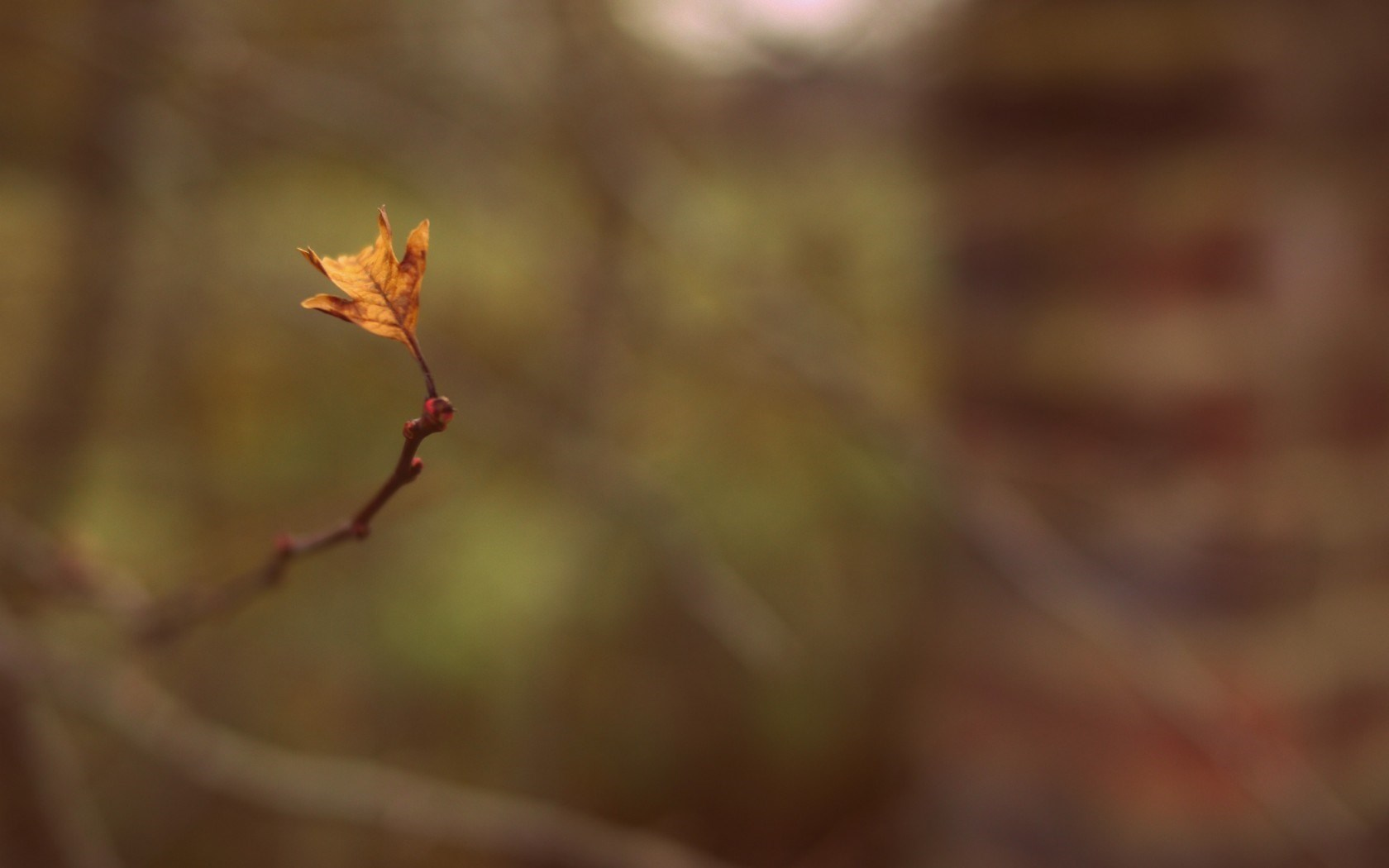 autumn branch leaf pictures