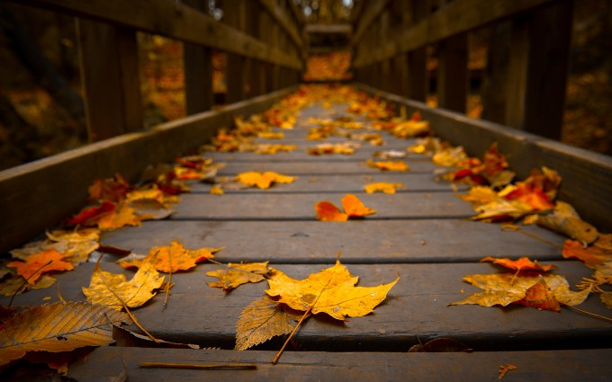 autumn bridge wallpaper